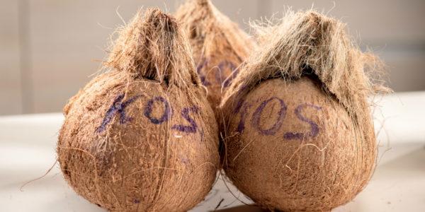 椰子全隻燉北菇湯-3